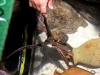 sea-life krake lola holt aus