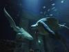 zebrahai lernt seine mitbewohner kennen