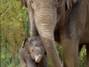 elefant-temi-und-baby_hellabrunn_2011