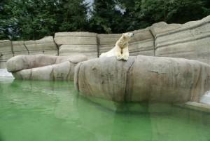 Tierpark Hellabrunn noch beliebter wie zuvor