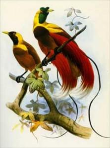 Vogelausstellung im Museum Mensch uund Natur München