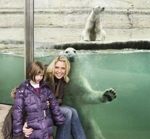 """Der Eisbär Giovanna sagt """"Hallo"""""""